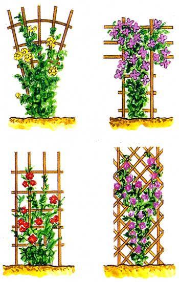 опоры для плетистых роз своими руками фото: 11 тыс изображений найдено в Яндекс.Картинках
