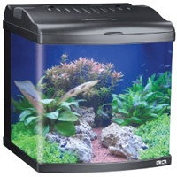 MT50 all in one tropical aquarium (80L)
