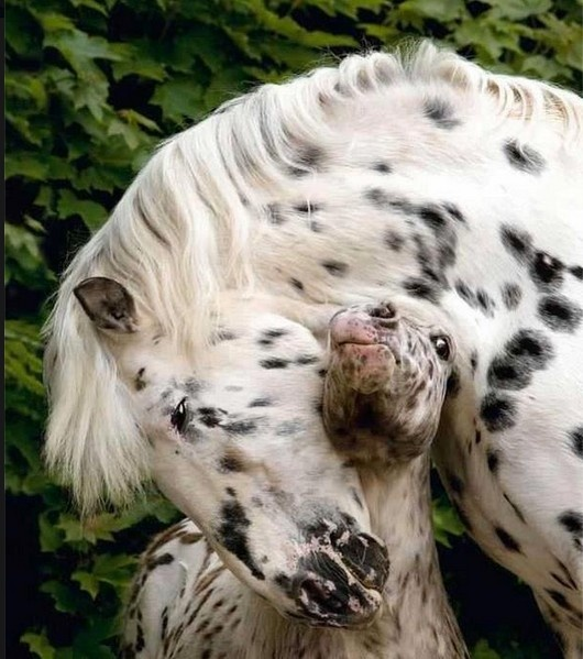 Horse Hugs... so sweet