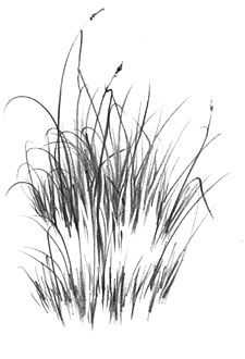 """HOW TO DRAW GRASS - An introduction to """"Negative"""" drawing"""
