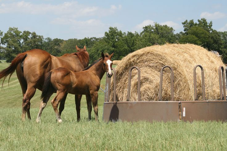 "The Tombstone round bale feeder is powder-coated brown. Its 17"" sheeted bottom keeps horses from stepping on hay and protects their legs from injury."
