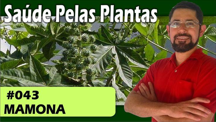 Saúde Pelas Plantas - Mamona [calvice, queda de cabelos, hemorroidas, la...