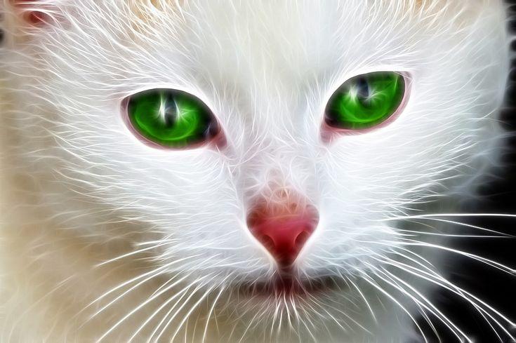 Domácí Zvířata, Bílá, Zelené Oči, Kočka