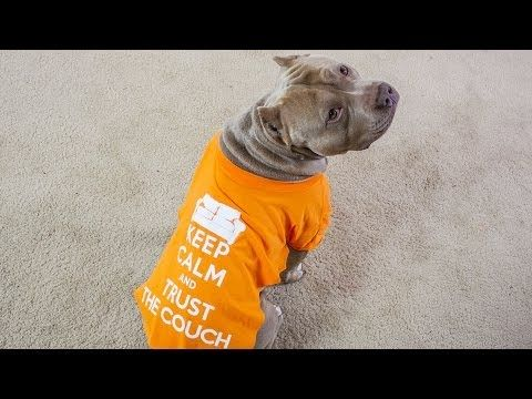 How To Make a DIY Dog Shirt | DIY Pet Projects DIY Projects | Do It Yourself Projects and Crafts
