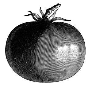 Free Vintage Clip Art ~ Tomato #1