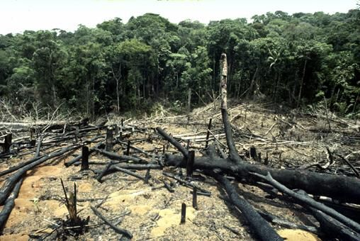 Deforestation is the biggest problem they have for living.