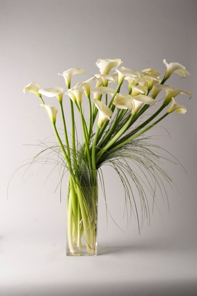 Images about arum calla lily on pinterest floral