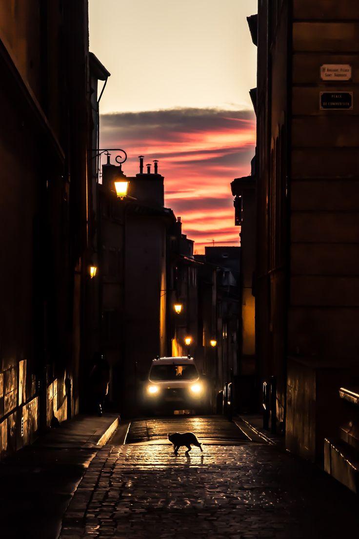 #sunset #street #streetphotography #light #cat #lantern Photo: run baby run! by Andre Crockard