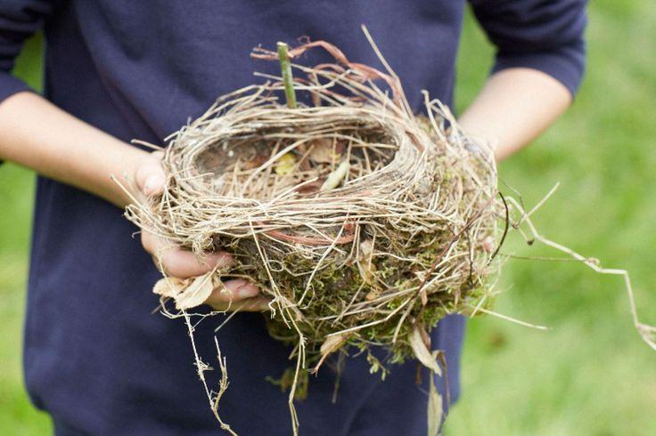 Girl in school uniform holds a birds nest.