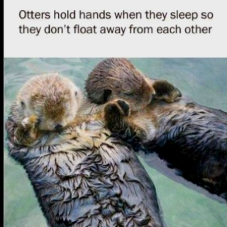 Awww. I like that!: Otters Hold Hands, So Cute, Holdhand, Seaotter, Did You Know, Sleep, Sea Otters, So Sweet, Animal