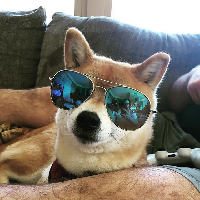 Look at this cool doge