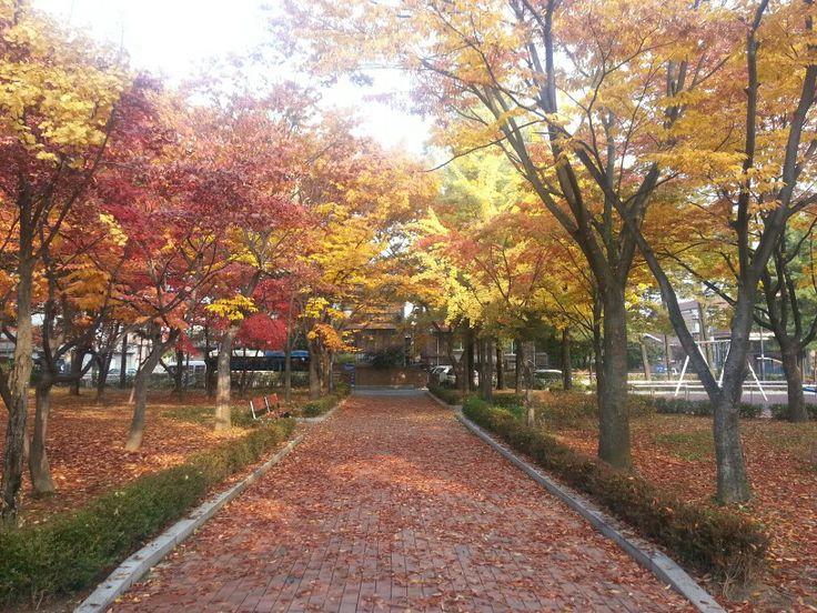 Fall in Gangnam, Seoul