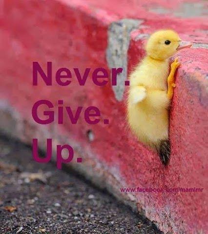 Hier zie je dat een (kuiken volgens mij) probeert de stoep op te komen - Never give up