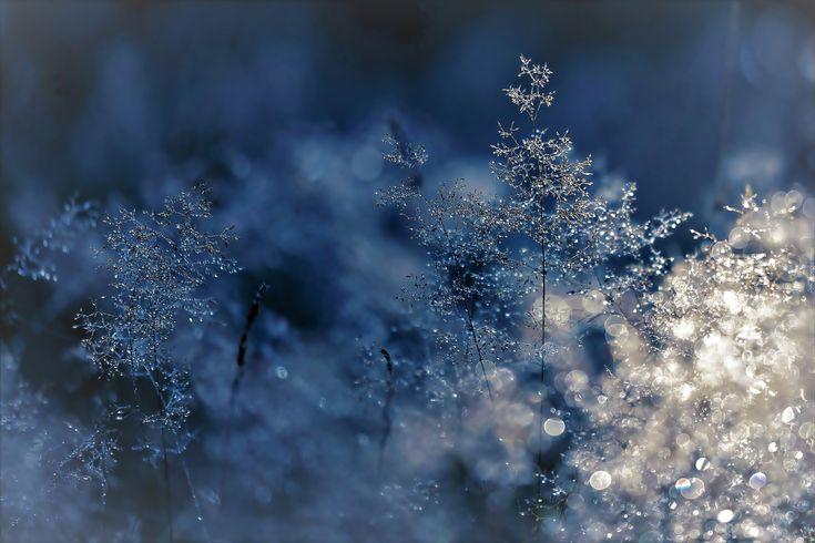 Zima, Zamarznięte, Trawy, Światło, Bokeh