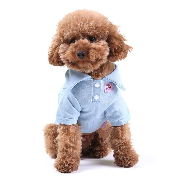 17 Best images about Toy poodle on Pinterest