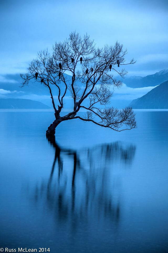 """The Sanctuary"" - Lake Wanaka, South Island, NZ. This popular year round destination is the home to a solitary tree in Roys Bay, presenting itself in many different guises depending on the seasons & the water levels of the lake. This tree is usually seen as an icon, less frequently as a safe haven - but for these birds the icon became a sanctuary - if only for the night."