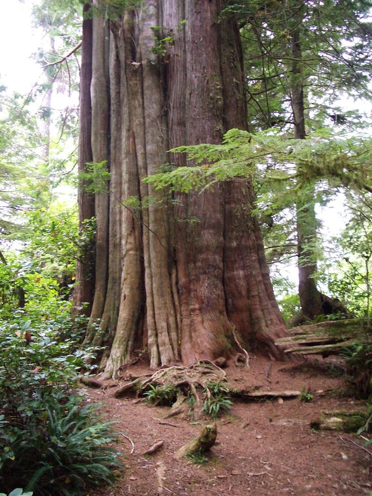 Tofino & Pacific Rim National Park