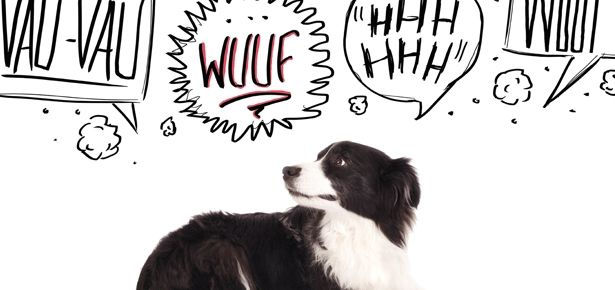 What's with all that racket? Read on to find out why your dog is barking.
