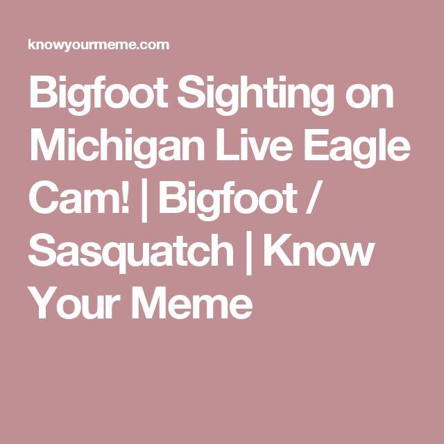 Bigfoot Sighting on Michigan Live Eagle Cam! | Bigfoot / Sasquatch | Know Your Meme