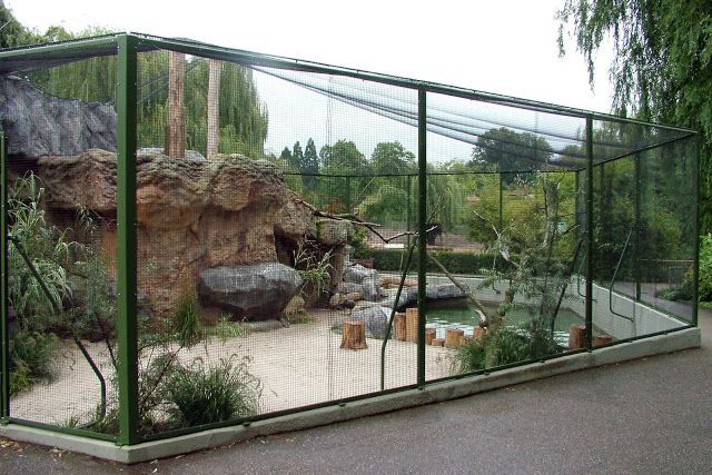 1000+ images about Bird Aviary on Pinterest