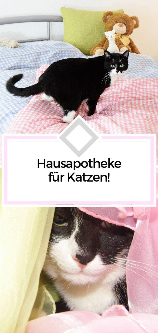 Hausapotheke Fur Katzen Was Darf Keineswegs Fehlen Katzen