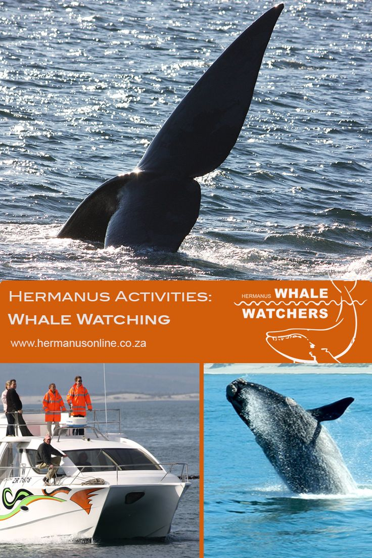 The Hermanus  boat based whale watching company  who aims to make your lifetime dream a personal experience.