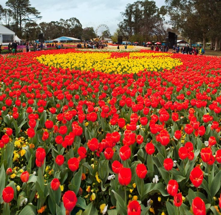 Floriade springs to life in Canberra