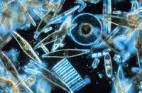 Resultado de imagen para plancton imagenes
