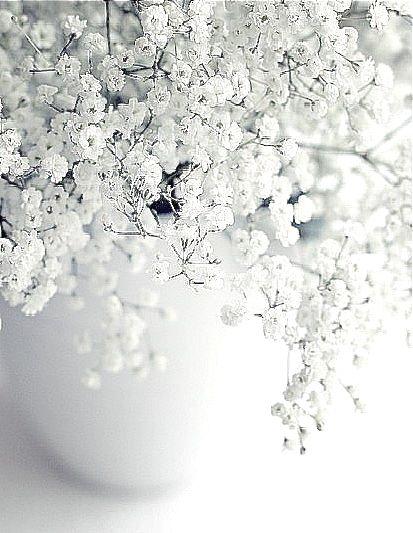 Inspiring & Dreamy Schleierkraut ist unglaublich schön.
