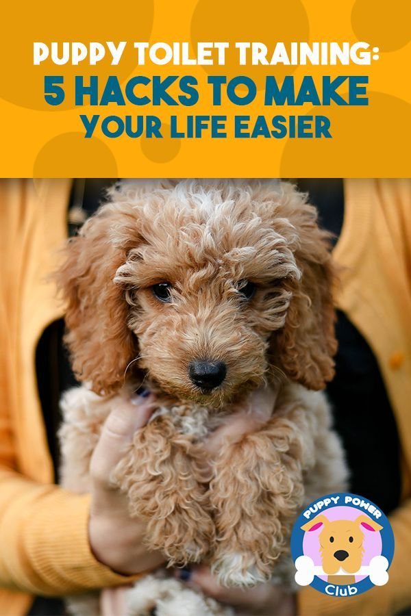 Puppy Toilet Training 5 Hacks To Make Your Life Easier Puppy
