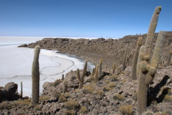 Salar de Uyuni, Bolivia: Amazing, The Salar De Uyuni, Bolivia Awesome, Poker Chips, Cute Ideas, Beautiful Places, Great Ideas, Bolivia Travel And Places, The World