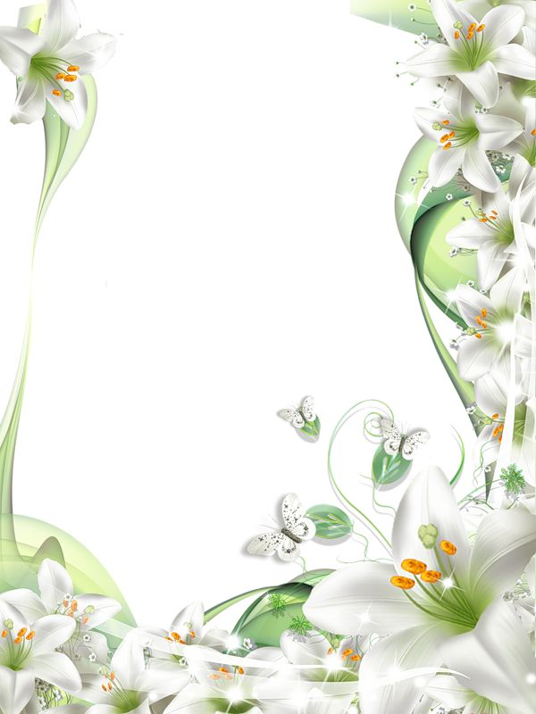 Transparent PNG Photo Frame with White Lilies Flowers