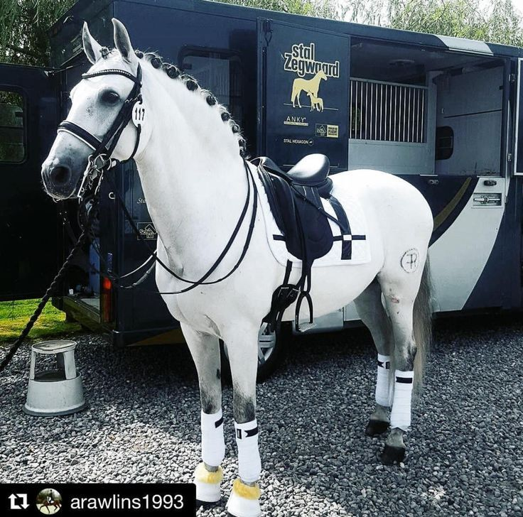 Anna took Tilly out for a brief dressage clinic wi…