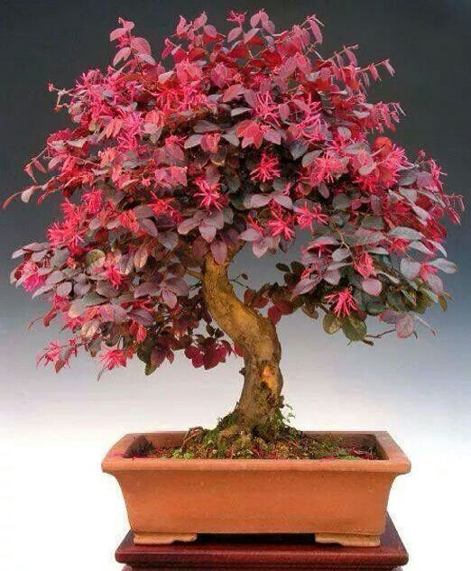 Bonsai with flowers
