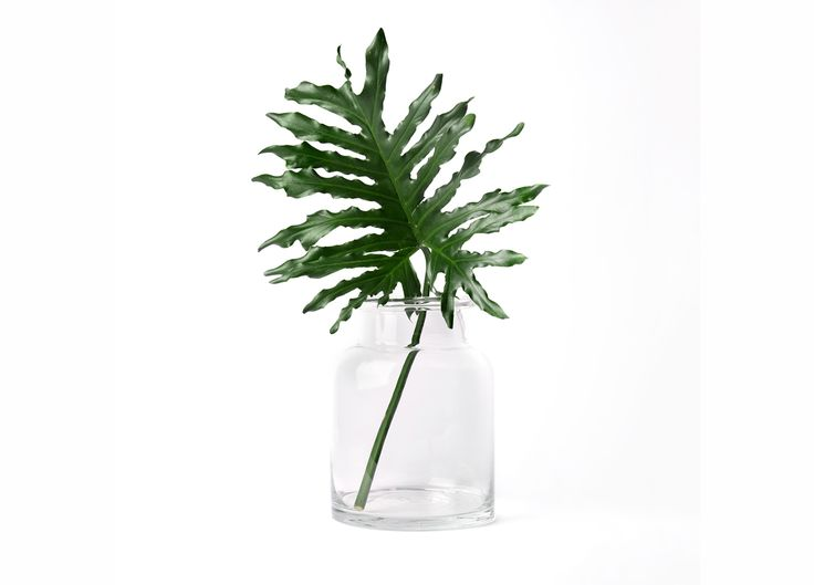 Rolled Edge Glass Vase | Est Essentials Collection
