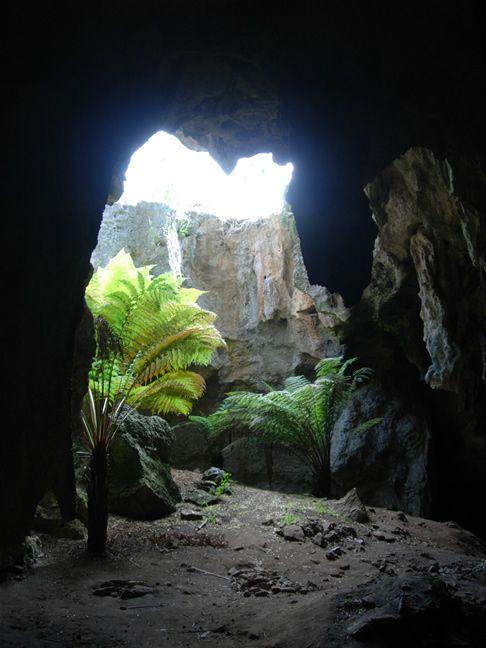 SA: Naracoorte Caves NP - Australia