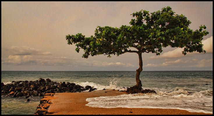 TROPICAL ALMOND TREE - Sao Tome, Sao Tome
