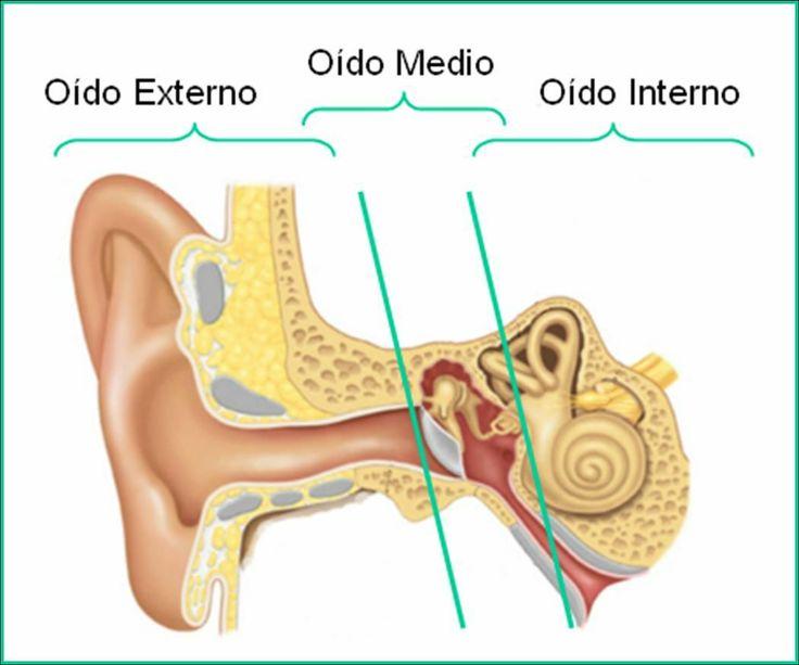 Anatomia del oído