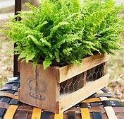 Pallett planter with chicken wire