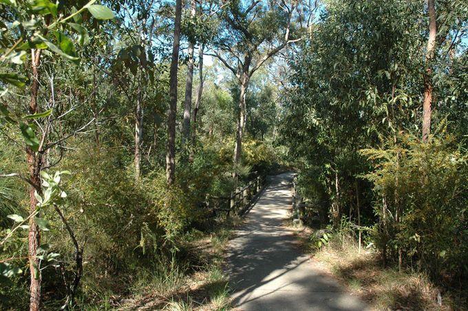 12 Great Brisbane Walks   Must do Brisbane