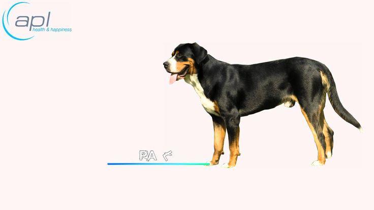 Zachęcamy do zapoznania się z Budową Anatomiczną Psa :-). Zobacz z czego składa się Twój czworonożny przyjaciel :-)