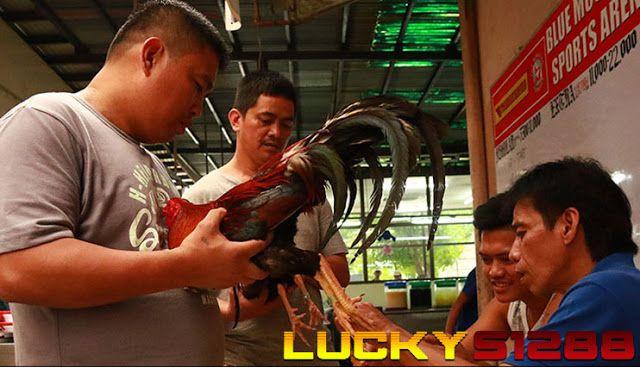 Bandar Judi Sabung Ayam Live Streaming S128, S1288, S12888