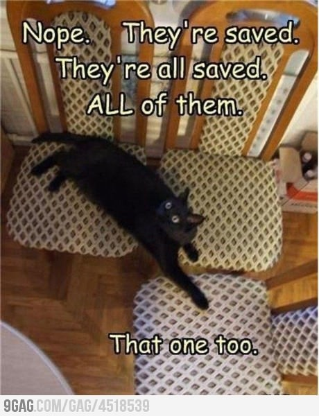 .Funny Pictures, Funny Cat, Movie Theater, Seats, So Funny, Kitty, Black Cat, Silly Cat, Animal