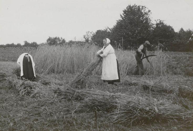 De roggeoogst 1940-1945 Roggeoogst in Twente. De vrouwen zijn gekleed in speciale oogstdracht: de 'Sint Joapiksdracht', genoemd naar Sint Jacobus, de schutspatroon van de oogst en de molenaars. Zijn naamdag op 25 juli luidde de roggeoogst in. #Overijssel #Twente #Saksen