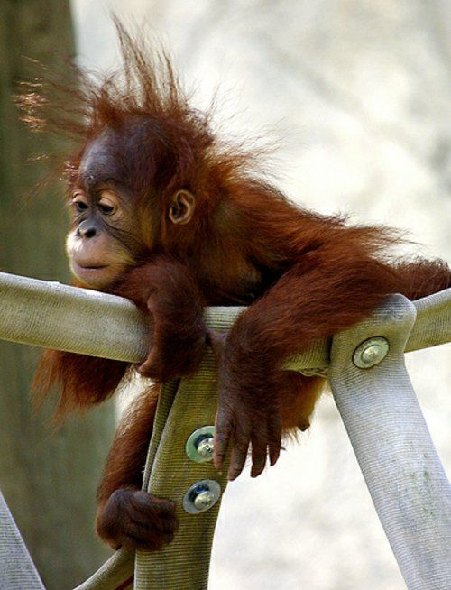 30 cute baby animals – Do not you look cute?