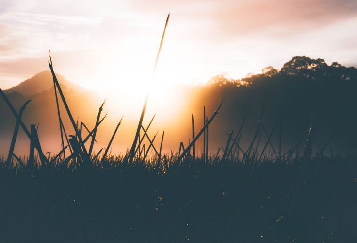 Golden sunrise through the reeds in the morning mist and fog at Dunns Swamp, Wollemi National Park, NSW, Australia. Travel and Landscape Photography.  #sunrise #goldenlight #sunflare #mountain #reeds #mist #fog #nature #landscapephotography #travel #travelphotography #newsouthwales #nationalpark #Australia #onethousandwordsorless #dew
