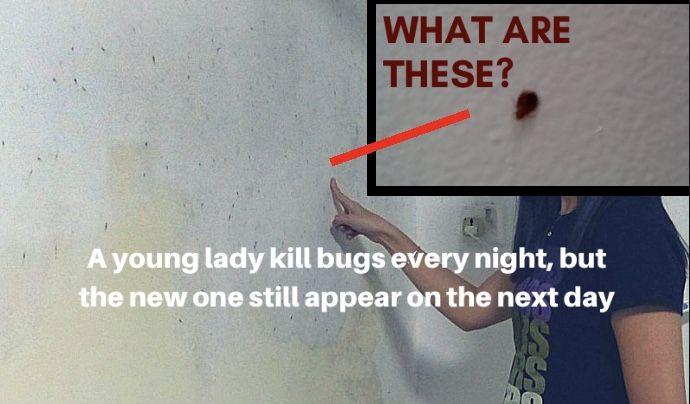 96e91212c191664b973e7b353d2a5310 - How To Get Bugs Out Of Your Room At Night