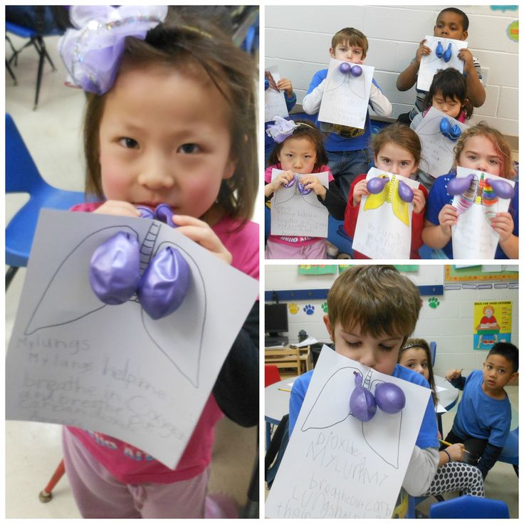 Our Hillsborough Kindergarten Enrichment class LOVED this science activity! Start by having your child draw lungs on paper. Then, punch a hole through each lobe shape and string a balloon through. Have your child blow into the balloons to see how the lungs expand and contract with air as they breathe! #HillsboroughYMCA.