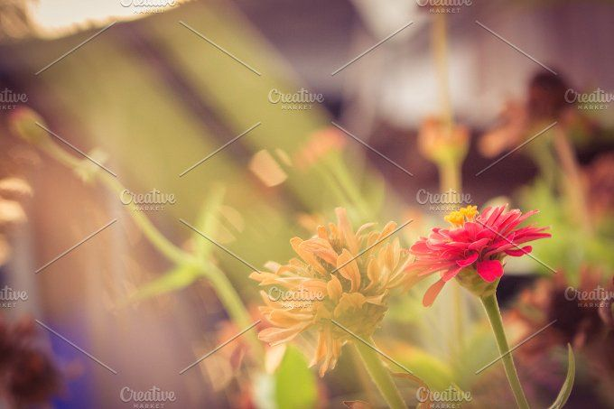 Flowers at sunrise by ptystockphoto on @creativemarket