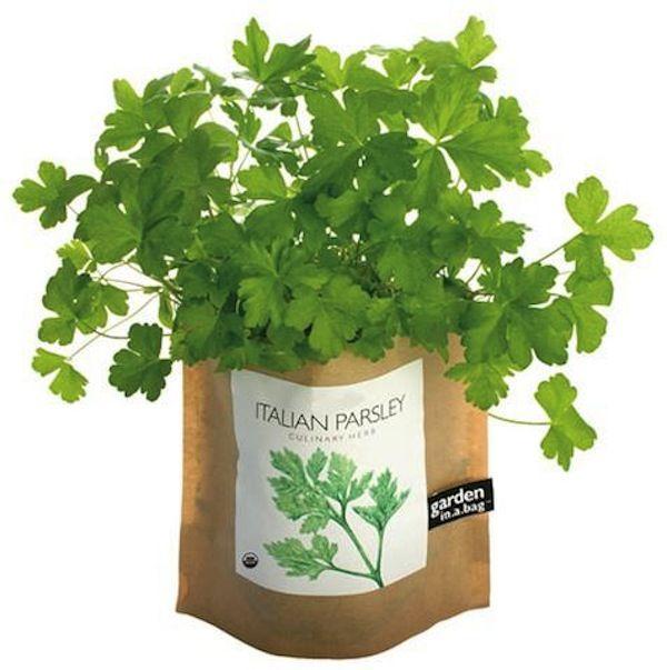 Garden In A Bag - grow organic herbs or edible pet grass from a bag